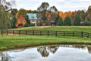 Middleburg_horse_country