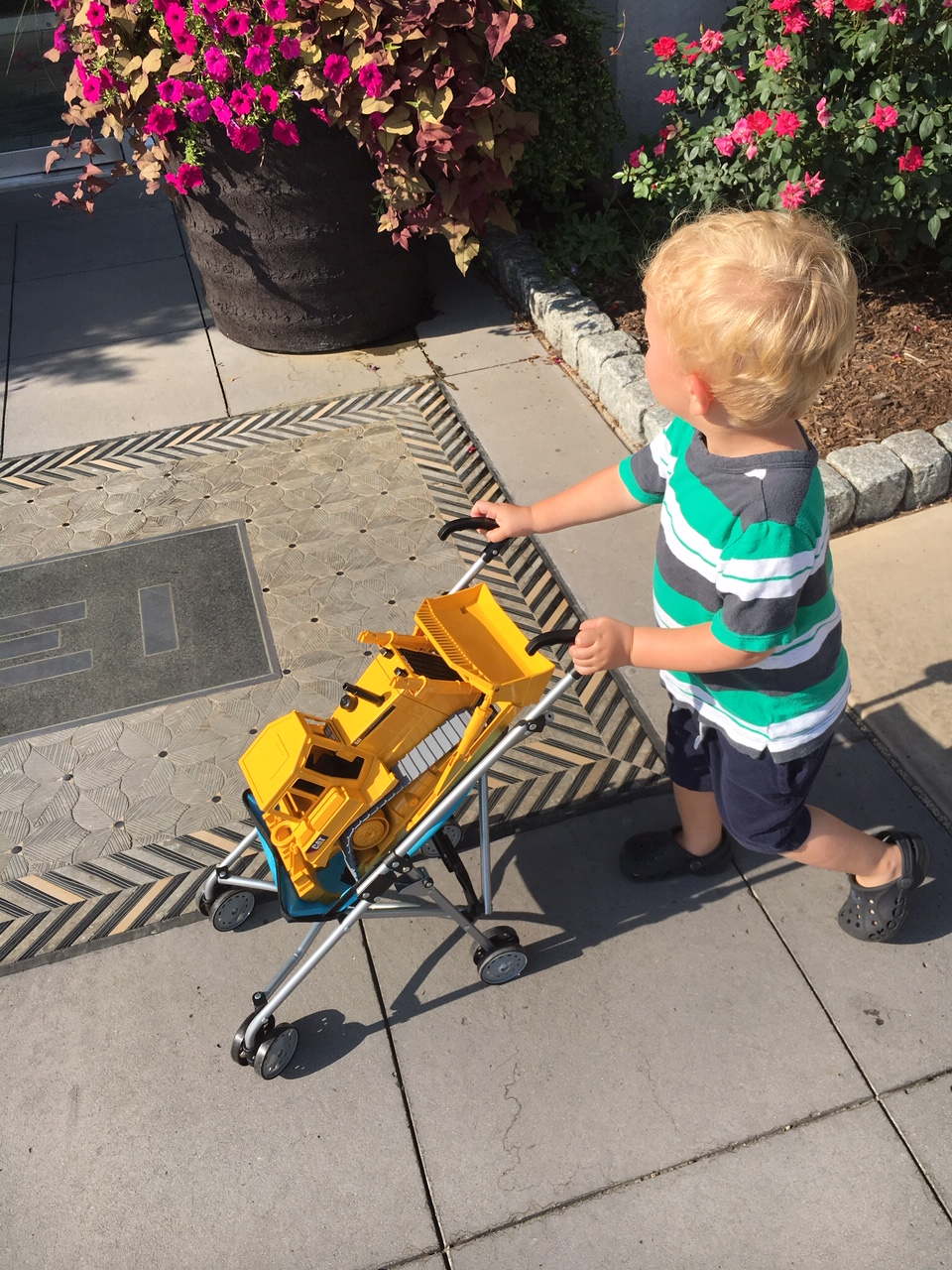 A toddler age boy pushes his bright yellow bulldozer in a toy stroller as he walks through the Pike and Rose neighborhood.