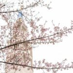 9 Unique Locations to View the Cherry Blossoms Without The Crowds