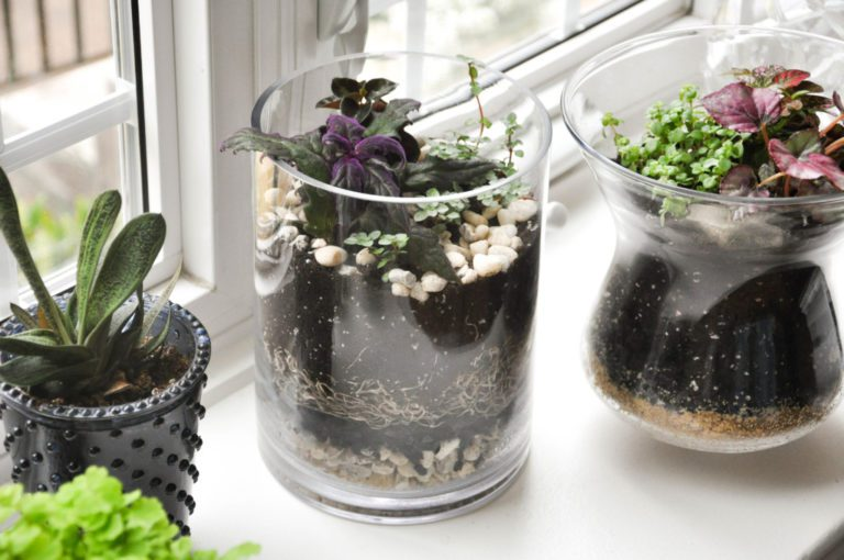 Creative Easy And Fun How To Build A Terrarium With Kids