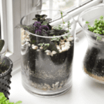 Creative, Easy, and Fun: How to Build a Terrarium with Kids