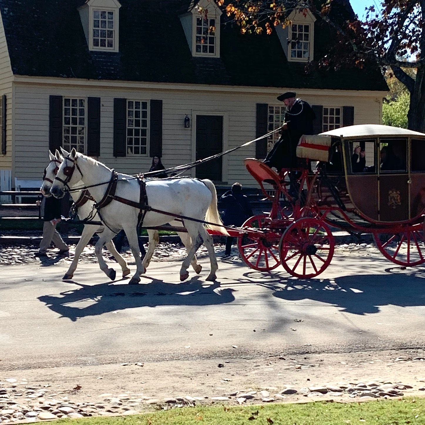 Two white horses pull a red covered carriage down the street in Colonial Williamsburg.