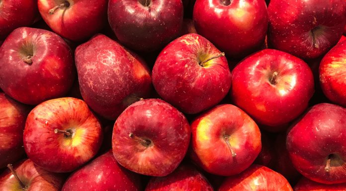 apple picking guide in the DC Area